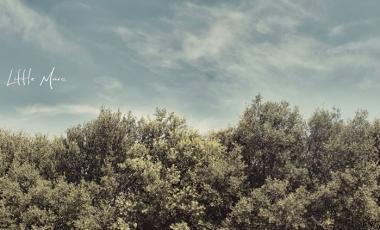 2014-festival-son-libre-041